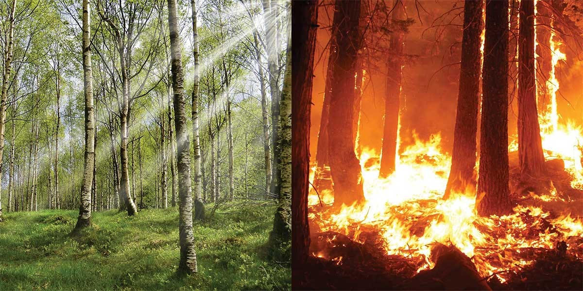 woodland scenes - no fire and burning